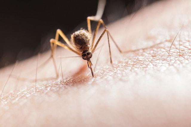 Heb je ook zo'n last van muggen in de nacht? Dan zijn dit de vijf beste tips om dit te voorkomen!